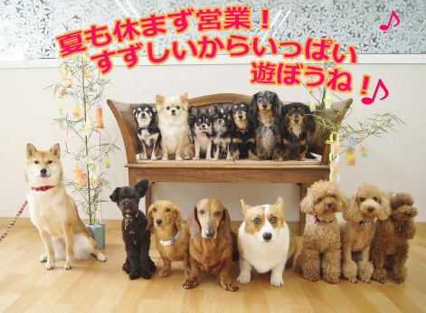 blog268458七夕.jpg