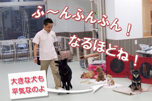 sついてUP文字2.jpg