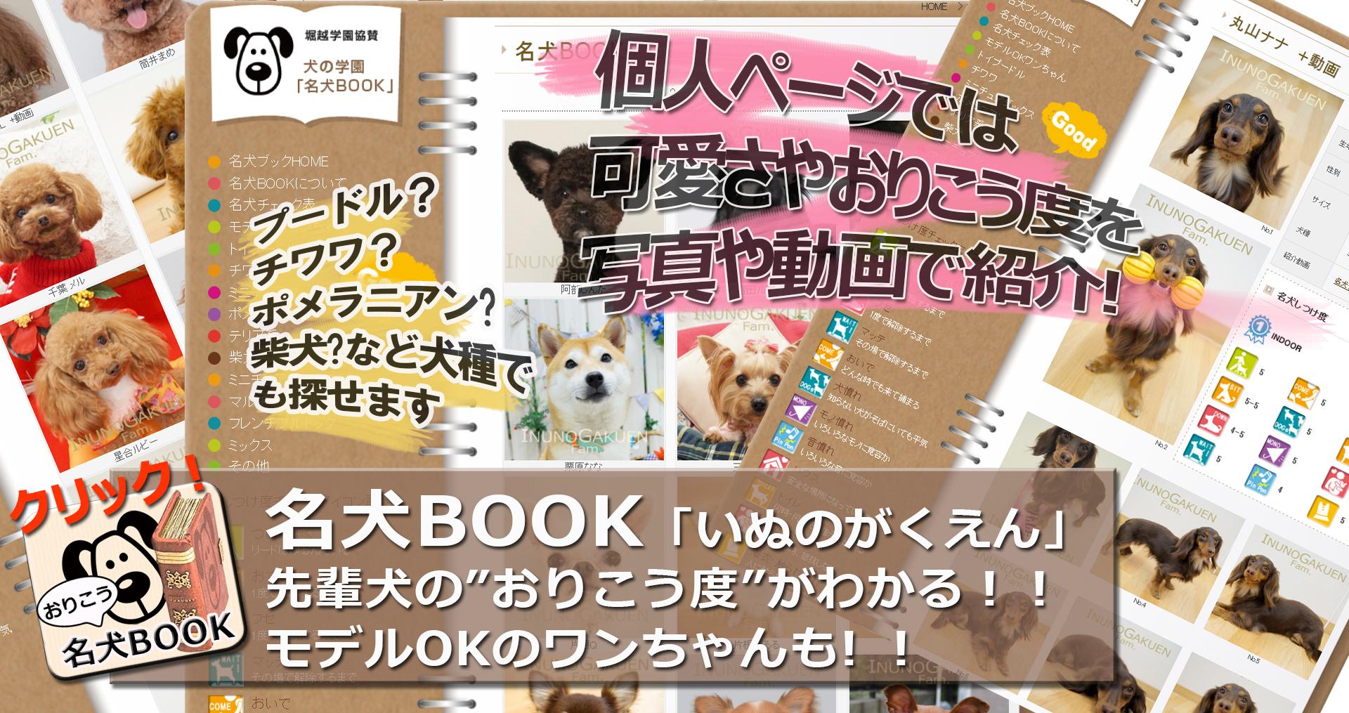 犬しつけ教室を東京都港区でお探しならファミリーナガーデン南青山・ペットホテルも!トップ画像3