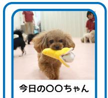 コドモンアイコン2-2.jpg