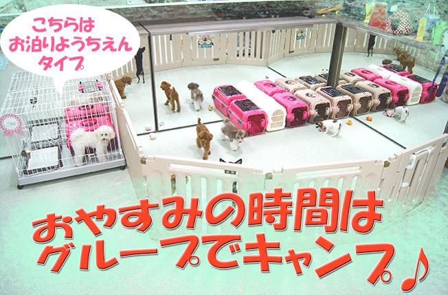 サマーキャンプ2大4ぼかし.jpg