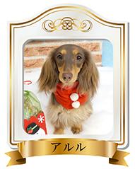 優良犬フレームアルル2.jpg