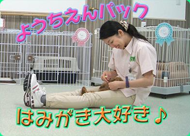 お泊り広告小松歯磨き.jpg