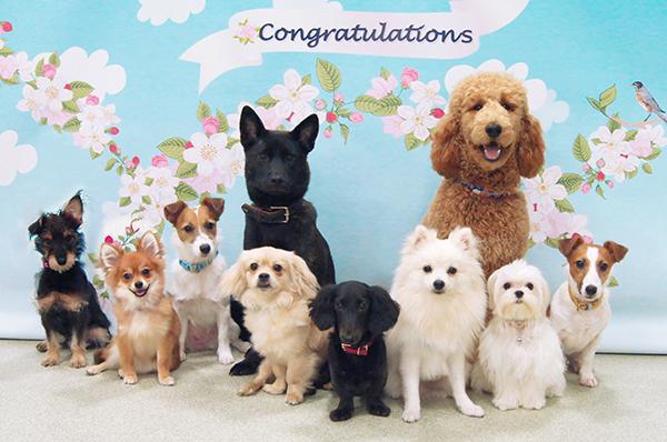 卒園犬集合写真1-S.jpg