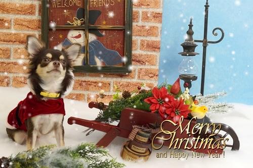 1雪-メリークリスマスs.jpg