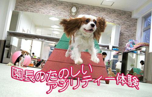 ダルくんタイトル画像.jpg