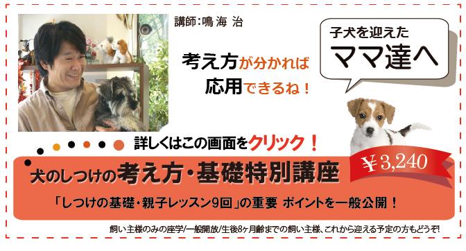 しつけの考え方TOP画.jpg