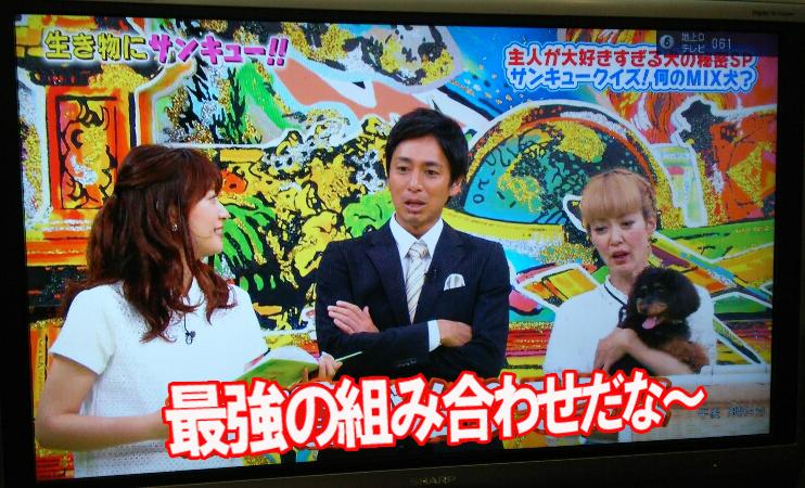 テレビを写メ葵ちゃん.jpg